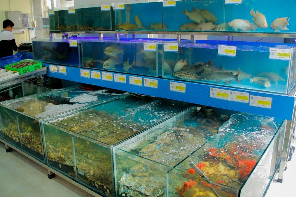 địa chỉ bán cá uy tín