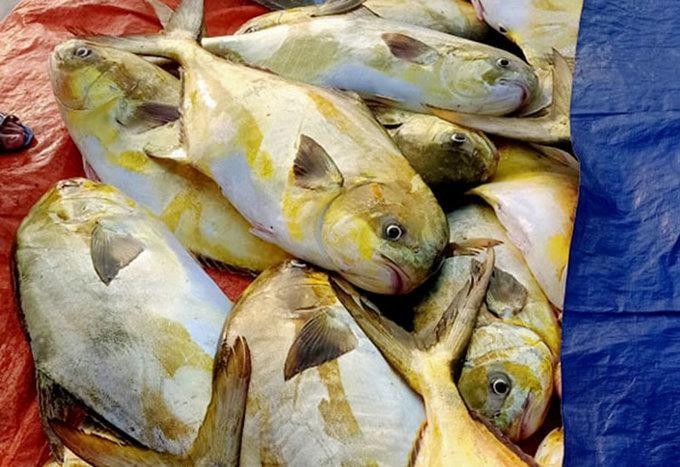 Bảng báo giá cá chim giá rẻ tươi sống nhất hiện nay