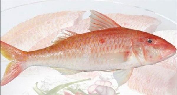Cá phèn đỏ