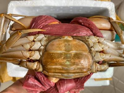 Hướng dẫn cách nấu lẩu cua biển chua cay ngon ngất ngây