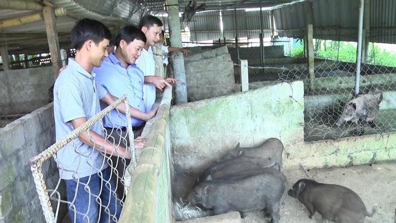Bảng giá lợn rừng